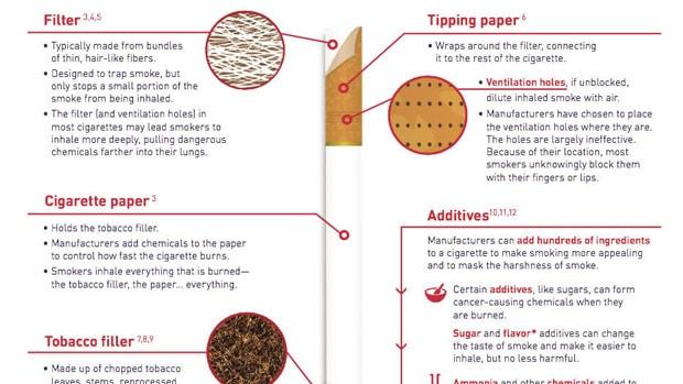anatomy of a tobacco cigarette